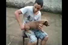 Aufgezogener Hund