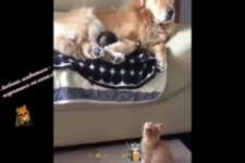Grappige honden en katten - Lustige Hunde und Katzen
