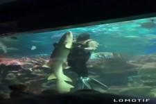 Mit dem Hai tanzen
