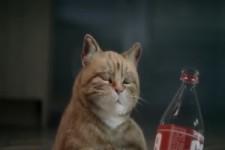 Lustige Katze