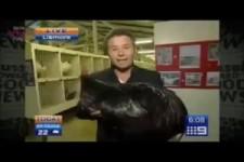 Huhn-greift-reporter-an
