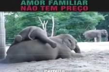 Lustige Tierfamilien