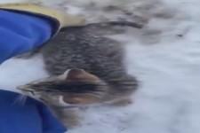 Katze vom Eis lösen
