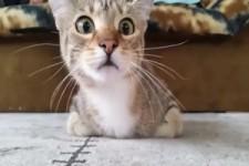 Katze schaut spannenden Film an