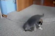 Fiese Katzen attackieren Hunde