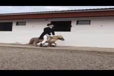 Lustiges Pferdchen