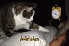 Lustige Katzen wünschen einen guten Morgen