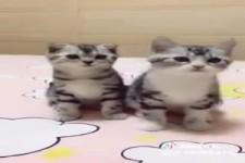 So süß die zwei Katzen