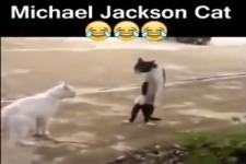 Michael Jackson Katze