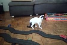 Katze spielt mit Autorennbahn