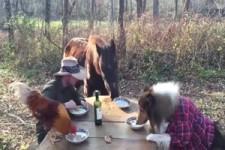 Gemeinsames Essen mit den Tieren