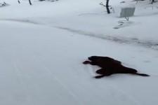 Labrador rutscht den Berg runter
