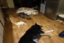 Katze schleicht durchs Hundelager