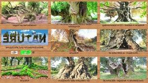 Bemerkenswerte und alte Bäume