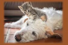 Friendship - Freundschaft