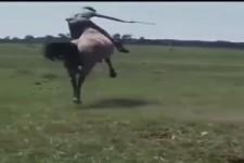 Der Typ kann reiten