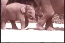 Elefanten vergessen nicht