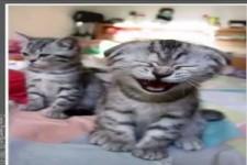 Wie du merkst, dass deine Katze dich gesehen hat