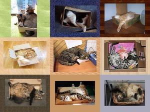 In Schachteln schlafen - 2