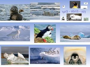 Arctic und Antarctic