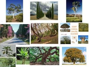 Trees-Arbres-Bäume-Arboles...