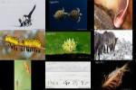 Australian-Photography-Awards-2019-Wildlife.ppsx auf www.funpot.net