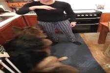 Hundetraining in der Küche