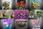 Wunderschoene-Blumengruesse.pps auf www.funpot.net