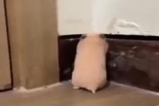 Hamster erschrecken