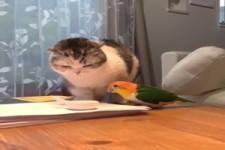 Katze und Vogel beobachten sich genau