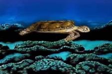 Tolle Schildkröte