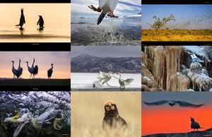 bird photographer of the year awards