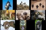 comedy-wildlife-photo-awards-2016.ppsx auf www.funpot.net
