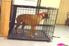 Tierische Entfesselungskuenstler