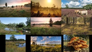 Nationalpark Dwingelderveld in den Niederlanden