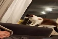 Spaß mit der Katze