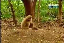 So ein frecher Affe