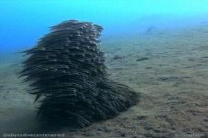 Das Fisch-Monster