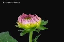 Blüten im Zeitraffer