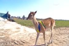Handaufzucht Bambi fühlt sich in ihrer Familie pudelwohl