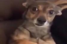 der Blick dieses Hundes ist doch genial