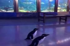 Kleiner Pinguin-Ausflug