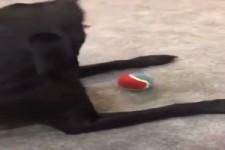 Wo ist mein Ball?