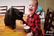 wenn die Katze dein Essen haben will