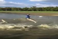 wenn Fische fliegen
