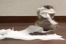der Toilettenpapier - Dieb