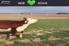 Wir lieben Kühe