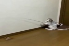 Diese Katze bedient ihr Spielzeug selber