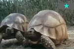 Schildkröten.avi auf www.funpot.net