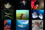 the-winners-of-the-2016-ocean-art-underwaterphotocompetition.ppsx auf www.funpot.net